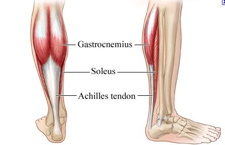 calf muscles - soleus